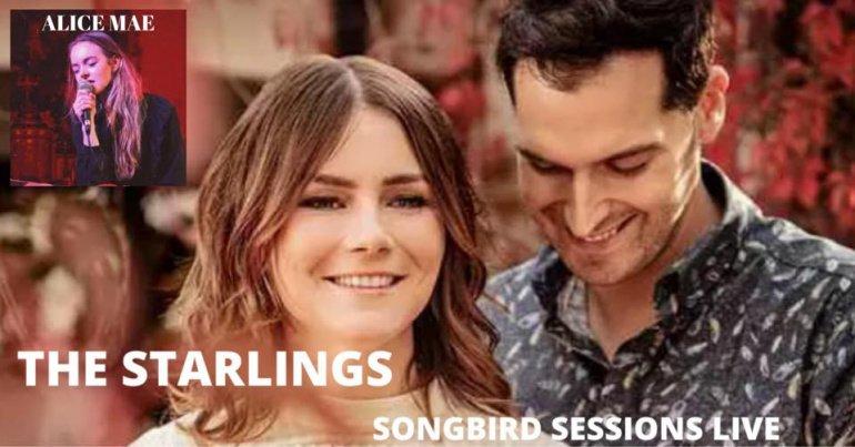 Mini-concert van The Starlings op 29/08